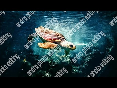 How to Create Transparent Watermark in Picsart