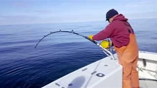 SWEET DREAM Sport Fishing 2017 Wrap up video