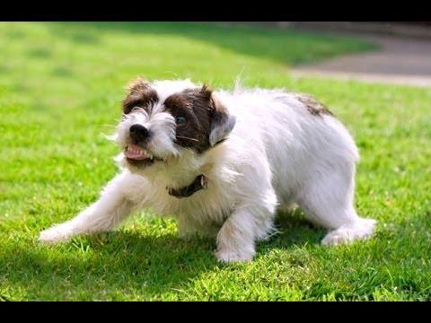 Aggression Tutorial: Aggressive Behavior in Dogs