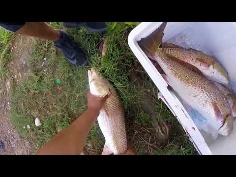 Redfish from the bank  San Antonio TX