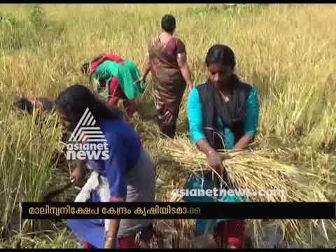 Success story in  Fallow land farming by natives from Kothamangalam
