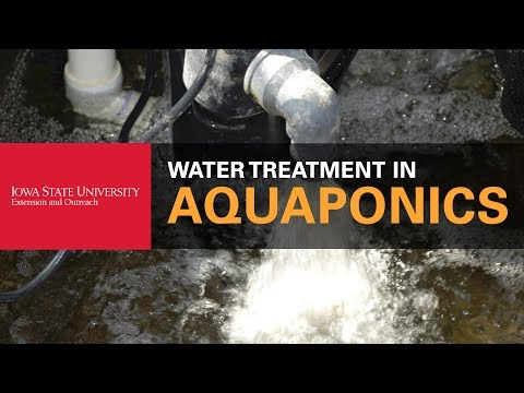 How To Take Care of Water in Your Aquaponics System