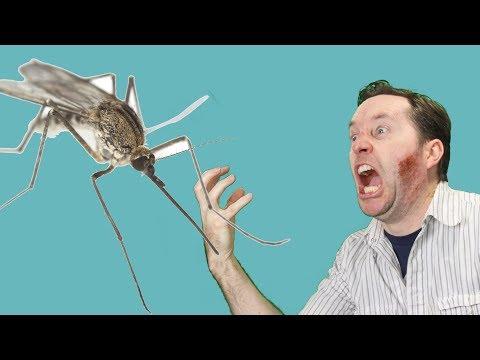 Let's Kill All The Mosquitoes! No, really. | Joe's Secret Vlog