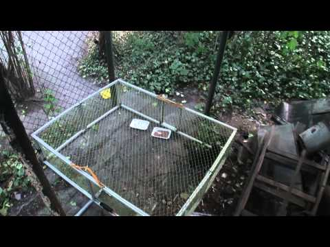Catching a feral cat with a radio controlled drop trap