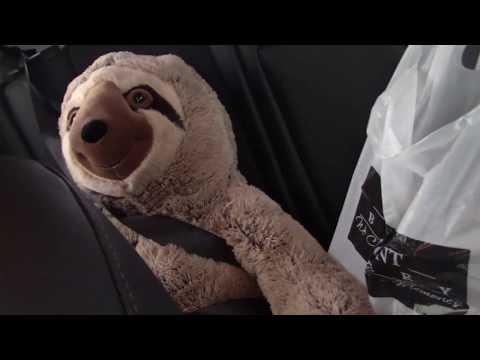 VLog #3 (Oakmont Bakery, Buying a sloth, Walmart)