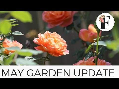 Garden Update Tour May 2018 - Gardening for Beginners Growing Flowers from Seed Cut Flower Farm Tips
