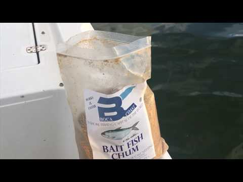 How to Locate & Catch Pilchards with a Cast Net
