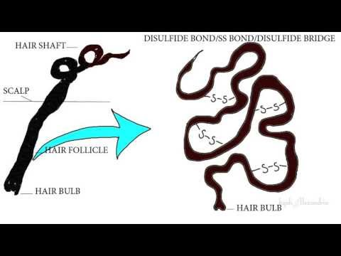 What Makes Hair Curly | CURLY HAIR SCIENCE SERIES Pt.2