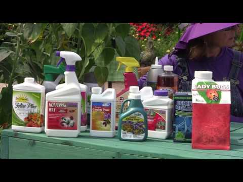 Organic Insect Control for Summer