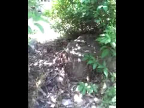 Termites leave a stump