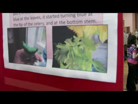 Tell You About It: Do plants absorb colored water-science fair
