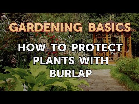 How to Protect Plants With Burlap