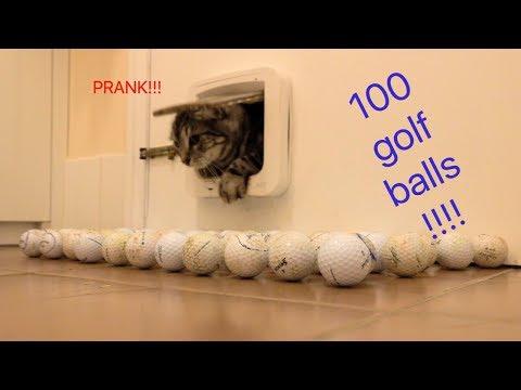 100 GOLF BALL PRANK ON CATS