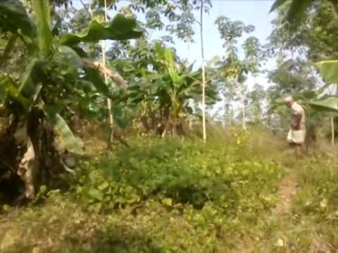 500P Cultivated (Rubber) Land for Sale in Horana.