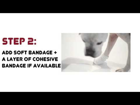 Bandaging a Dog's Wound
