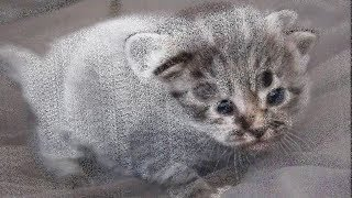 The Most Adorable Color-Changing Kittens !