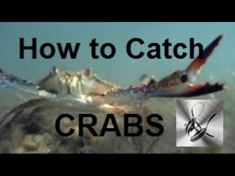 How to Catch Blue Swimmer Crabs | The Hook and The Cook