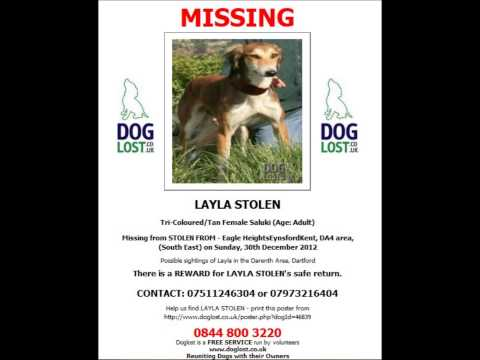 Dogs missing from Kent and the surrounding areas July 2013