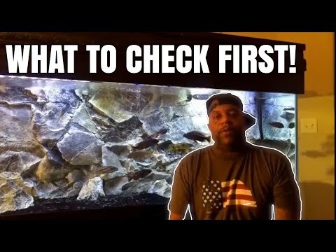My Fish Are Dying After Water Change | What To Check
