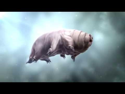Swimming Tardigrade
