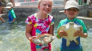 Grand Cayman Penyu Pengalaman - Memegang & Kolam dengan Turtles !!
