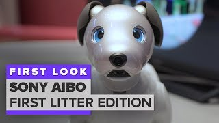 We played with Aibo: Sony