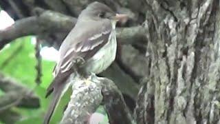 Vídeos para gatos para assistir, pássaros, esquilos , coelhos, esquilos , pombos,