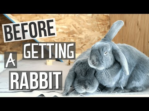 Things To Think About Before Getting A Rabbit