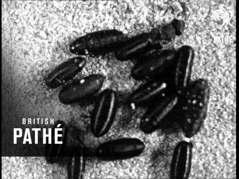 Secrets Of Nature - Where Flies Go In The Winter-Time (1922)