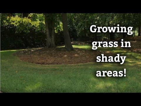 Will Bermuda Grass Grow in the Shade? - Warm Season Turf Tips