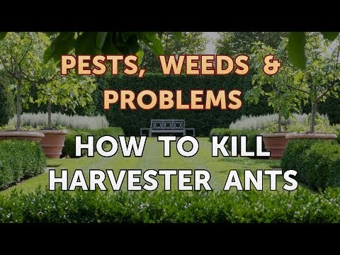 How to Kill Harvester Ants