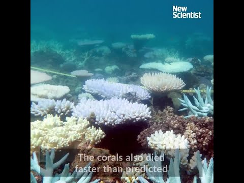 The Great Barrier Reef's last gasp