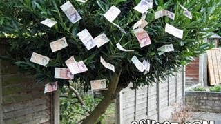 How To Grow Money On Trees