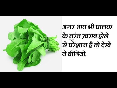How to store Spinach for 1 month, How to Store Spinach Fresh, How to Store Spinach in Freezer