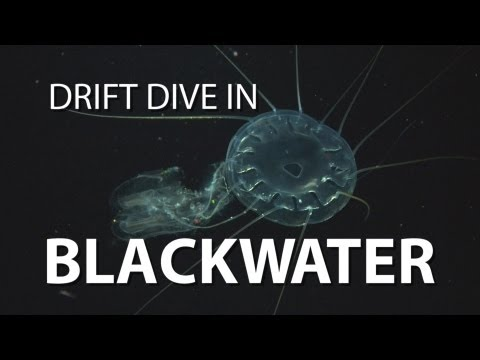 Blackwater Drift Dive | UnderH2O | PBS Digital Studios