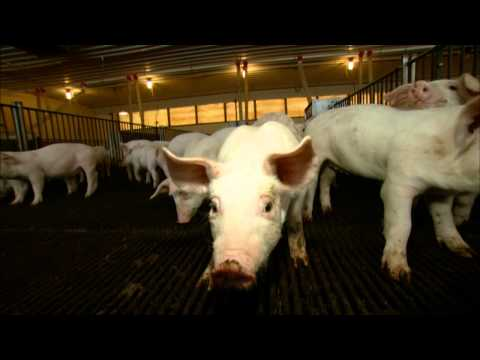 VetsOnCall - Dr. Ruen at the pig nursery: