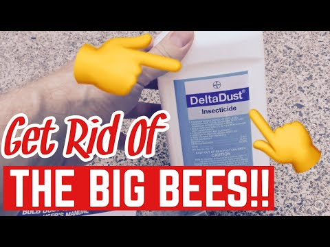 Get Rid Of Carpenter Bees With Delta Dust