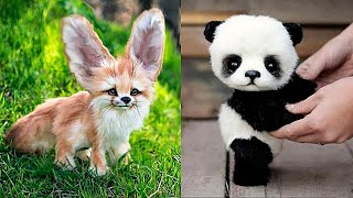 10 Cutest Baby Animals You Need To Pet