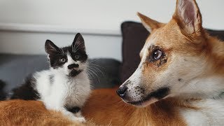 Most FUNNY and CUTE Cats and Dogs Playing Together Compilation 2019