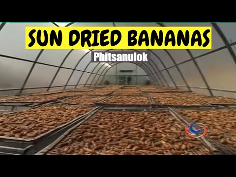 Sun dried bananas in Phitsanulok