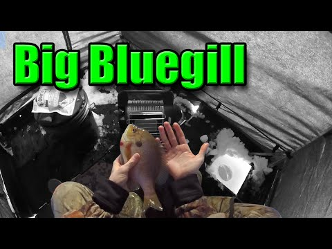 Ice Fishing For BIG Bluegill With Wax Worms (17 Fish)