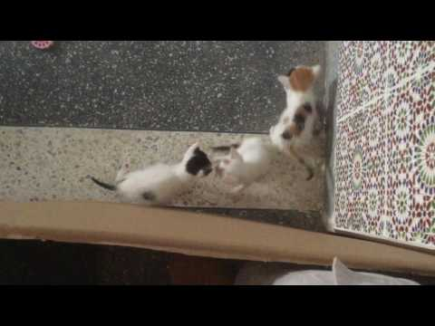 Kittens Learning to Play