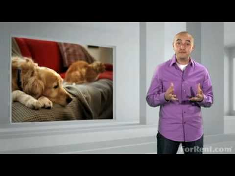 How-To Minimize Pet Hair