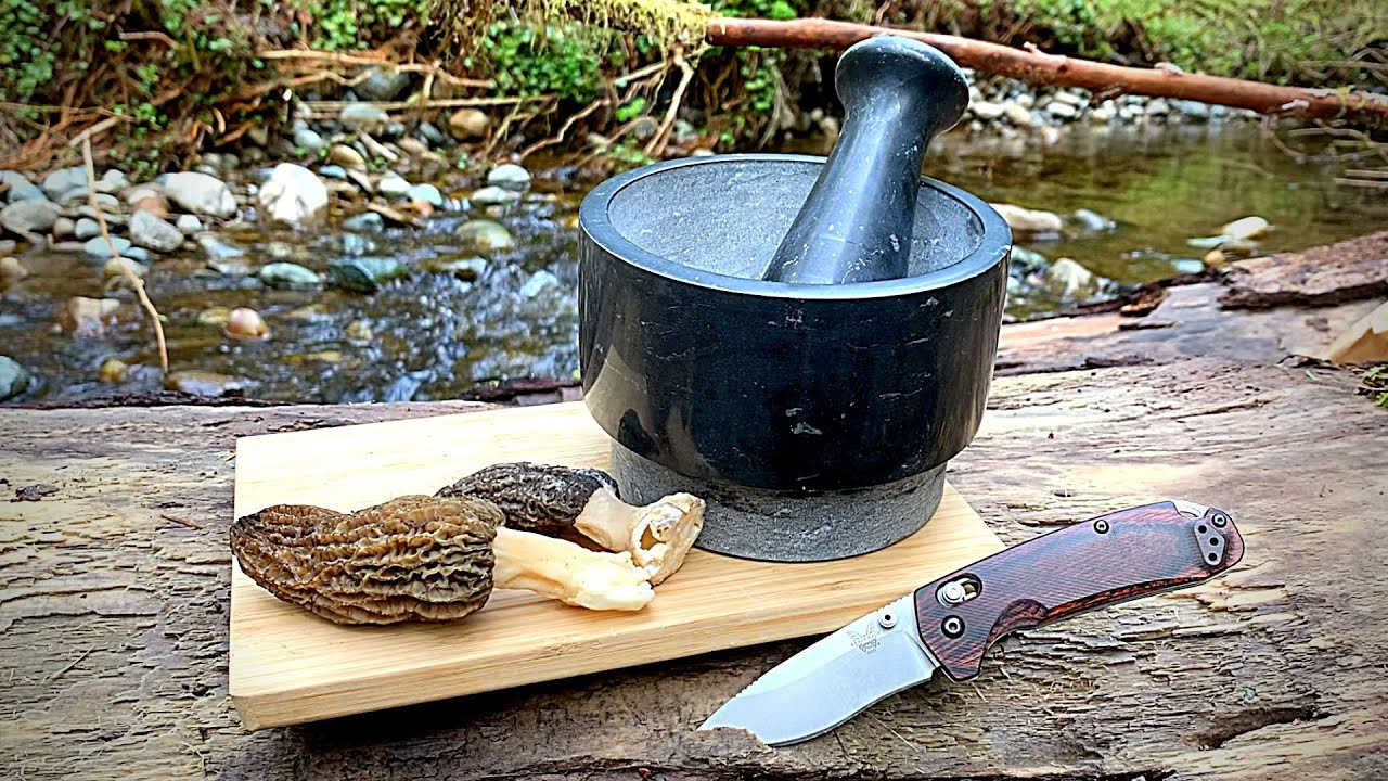 Morel Mushroom Forage & Cook | Shrooming 101