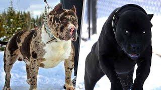 """5 فصائل من الكلاب يبدو وكأن ' الشيطان هو من خلقها """"...!"""