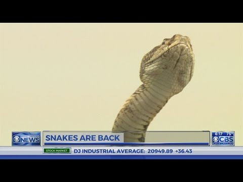 Mild winter has more NC snakes slithering about