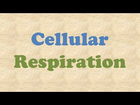 ATP and Cellular Respiration