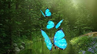 """Peaceful Music, Relaxing Music, Instrumental Music, """"Enchanted Journeys"""" by Tim Janis"""