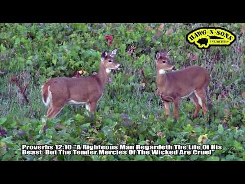Secrets In May That Will Help Your Success During Whitetail Deer Hunting Season 2017
