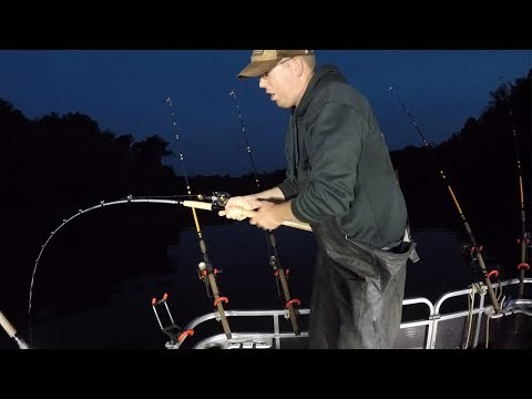 Warrior Cat Fishing Rod Review (vs. Whisker Seeker, Shatter Cat & Tangling with Catfish)